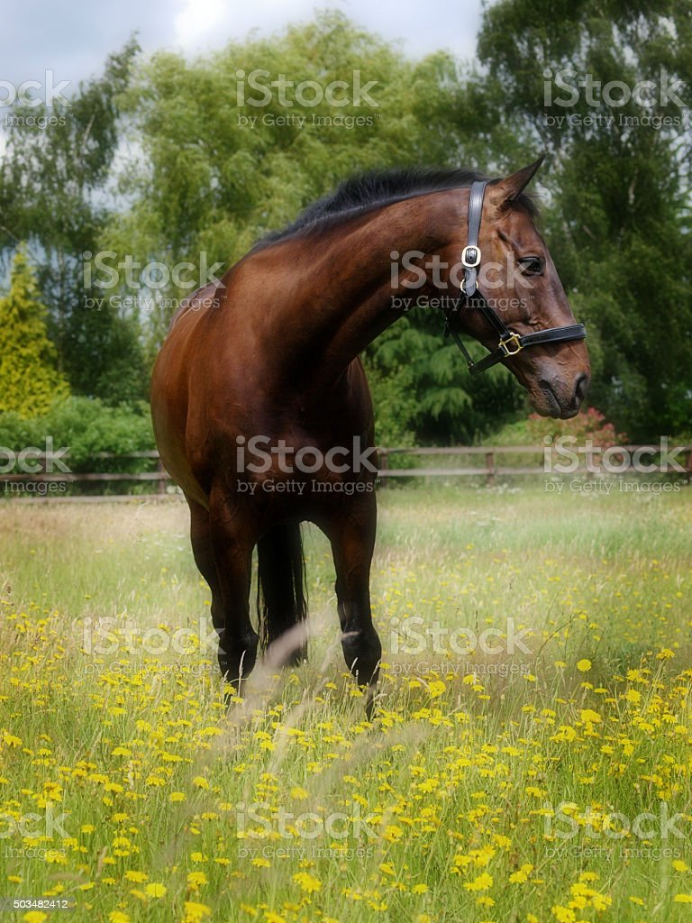 Horse Standing In Flowers stock photo