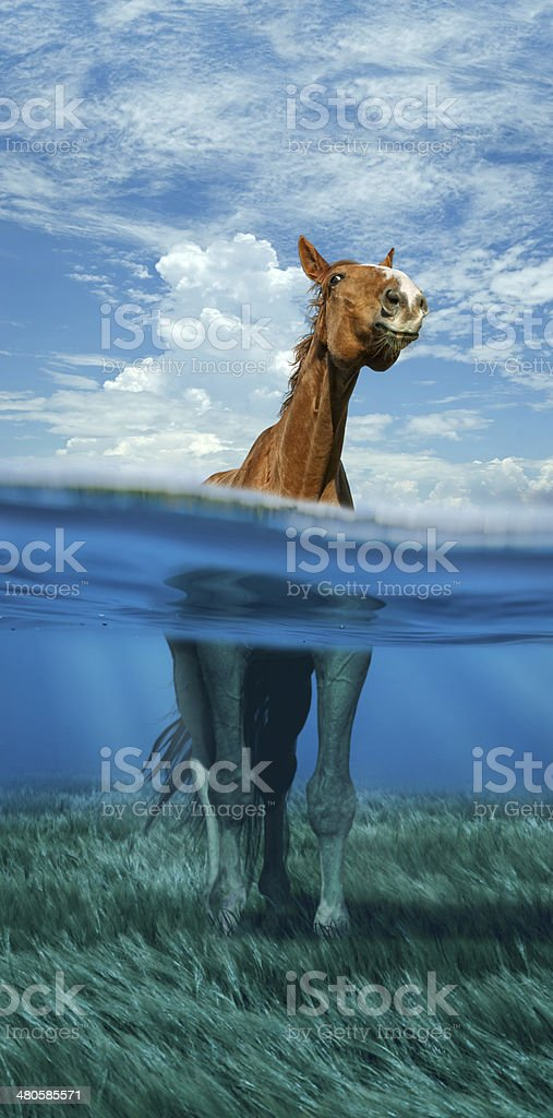 horse standing in water stock photo