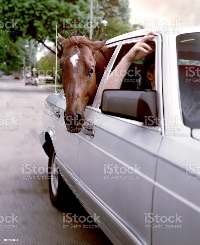 Horse Sticking Head Out of Car Window royalty-free stock photo