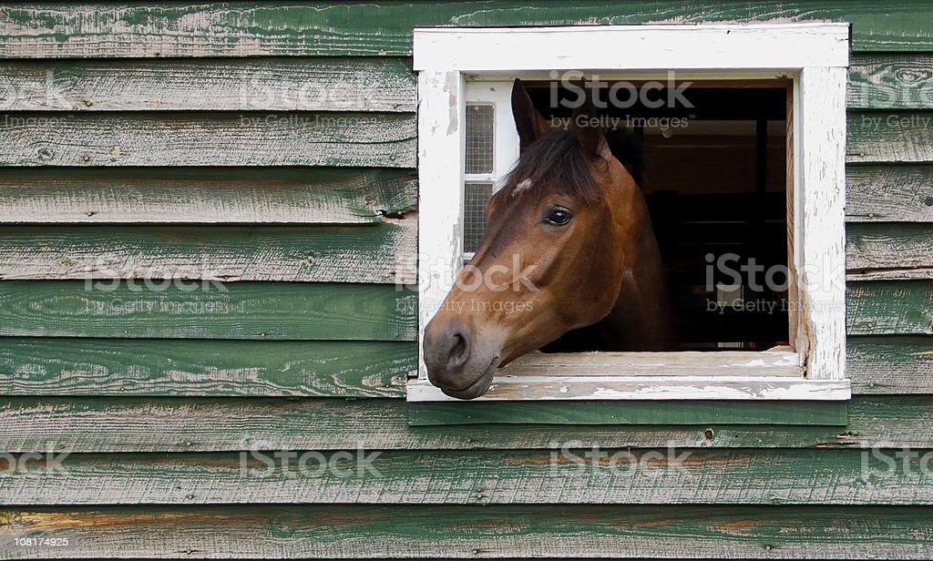 Horse Sticking Head Out of Stable Window stock photo