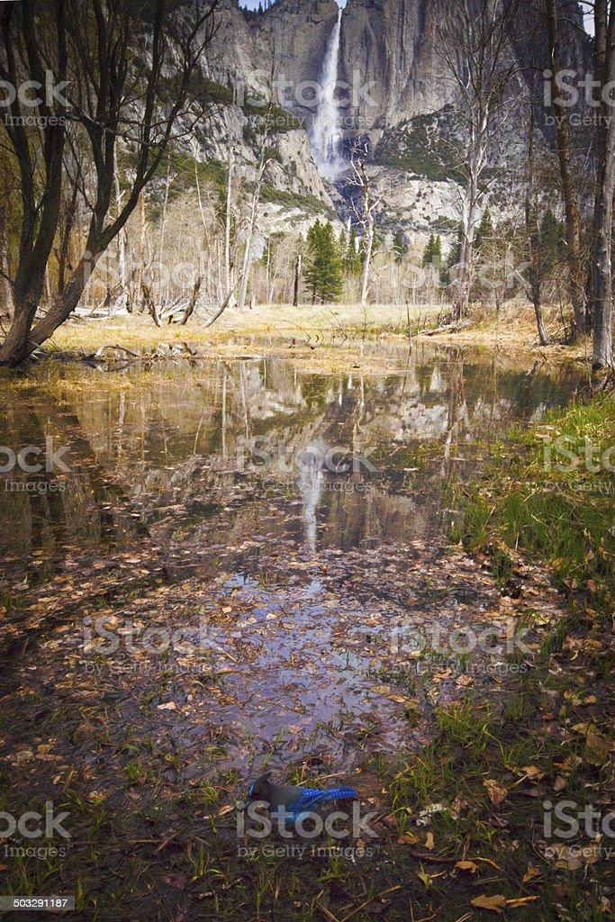 Horse Tail falls Yosemite stock photo