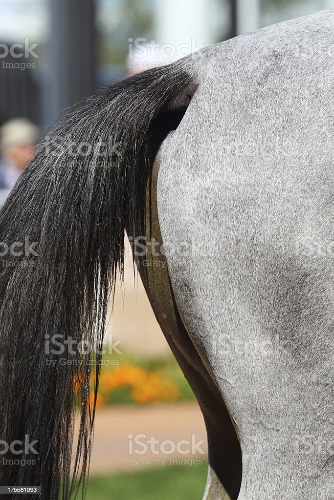 Horse Tail royalty-free stock photo