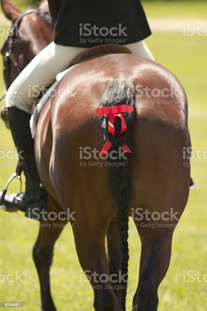 Horse tail with red ribbon stock photo