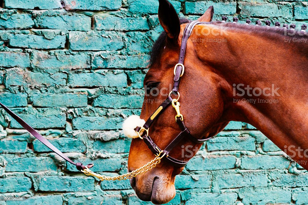 Horse tied his reins against a brick wall stock photo