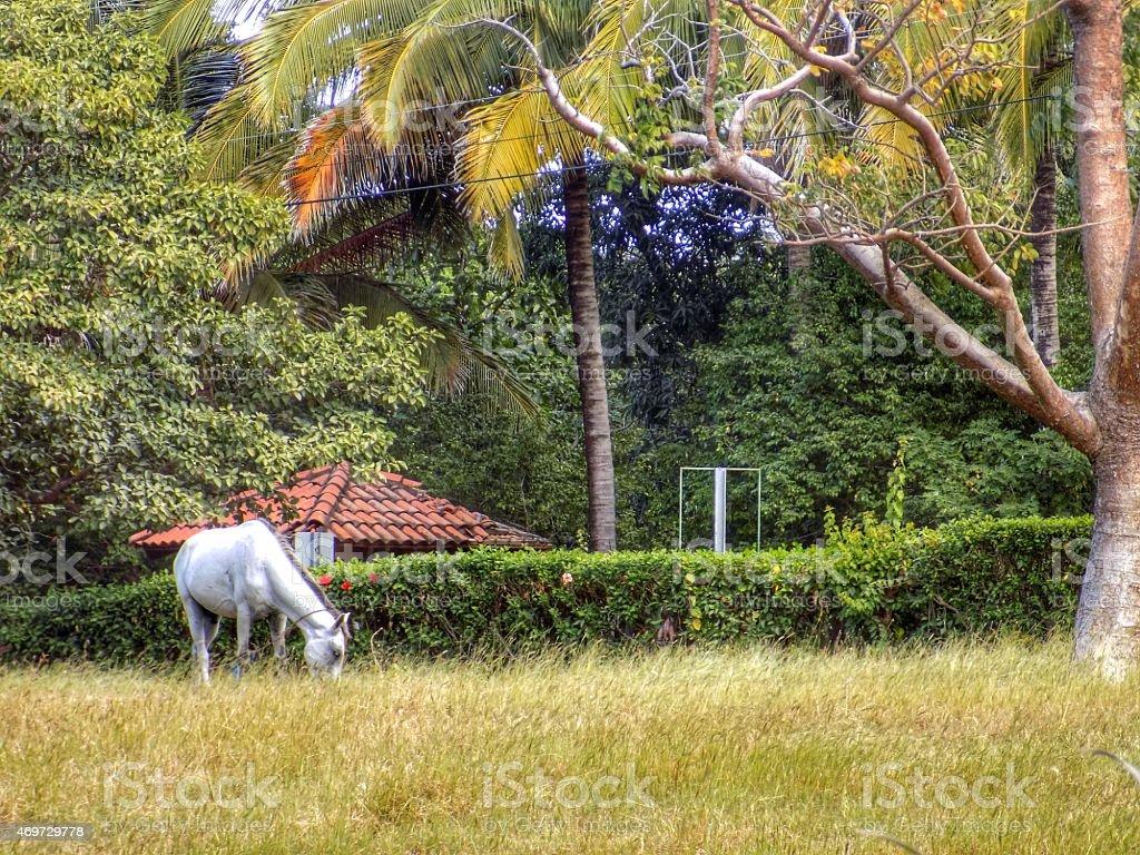 Horse Tied to Tree stock photo