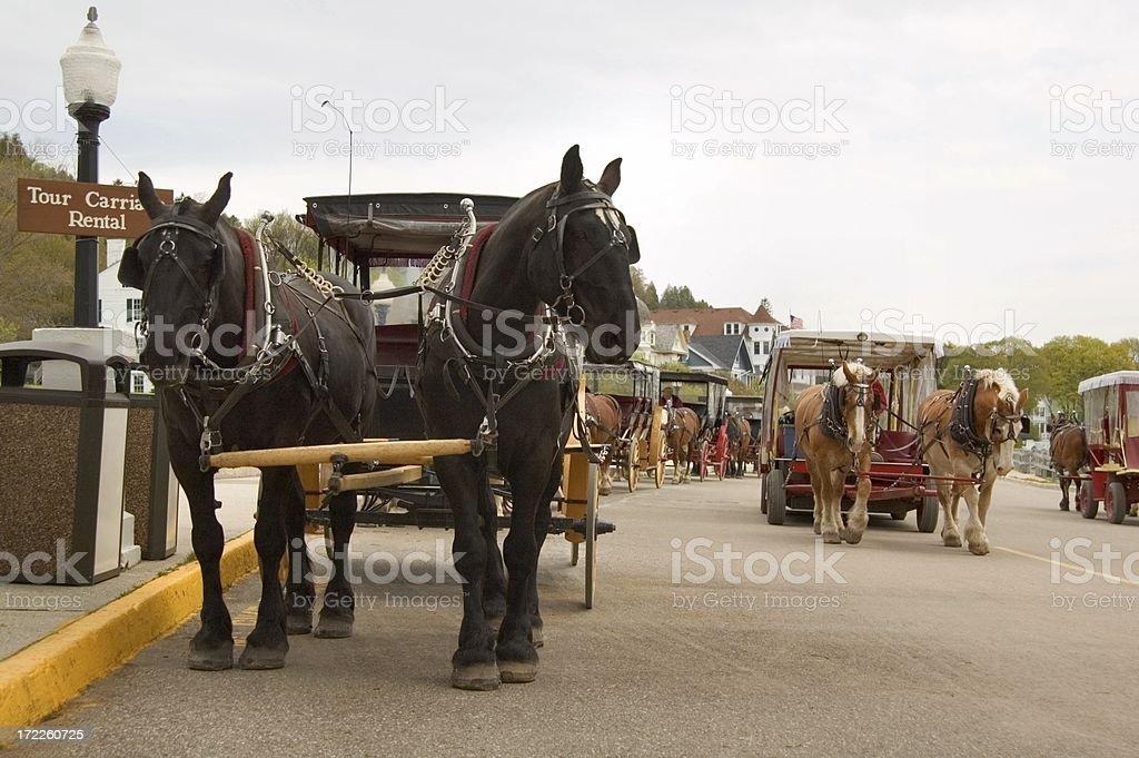 Horse Traffic stock photo
