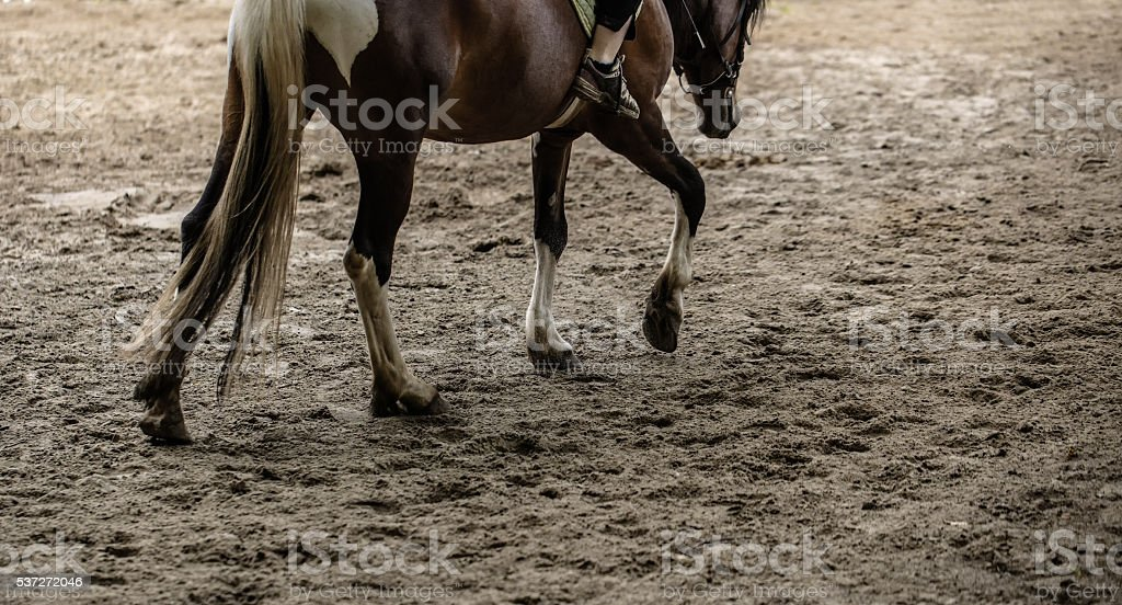 horse training outdoors stock photo
