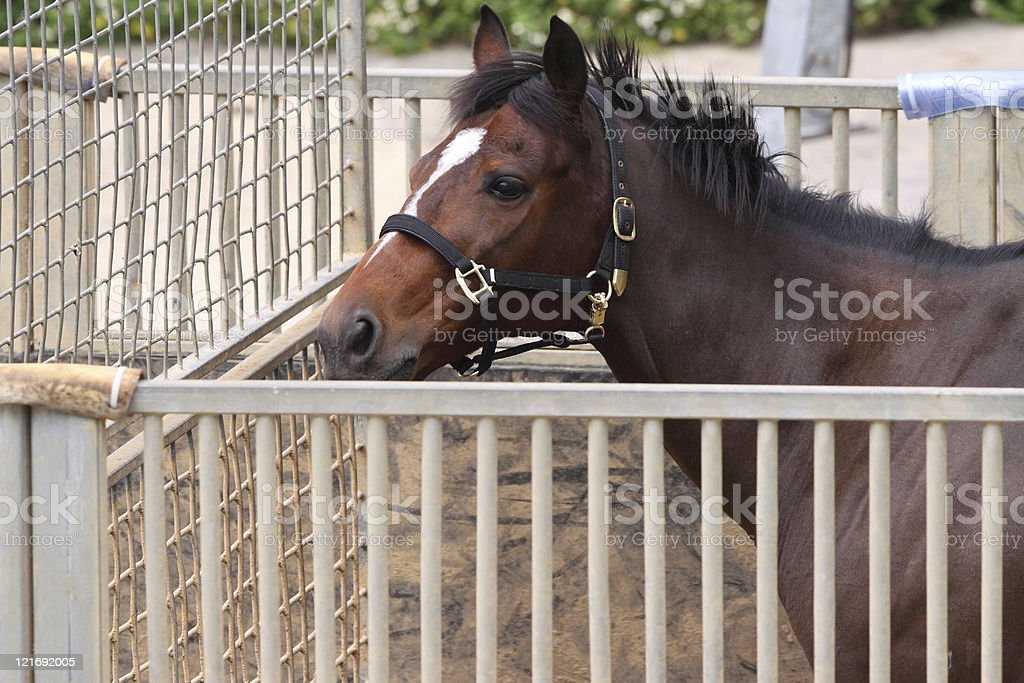 Horse Training stock photo