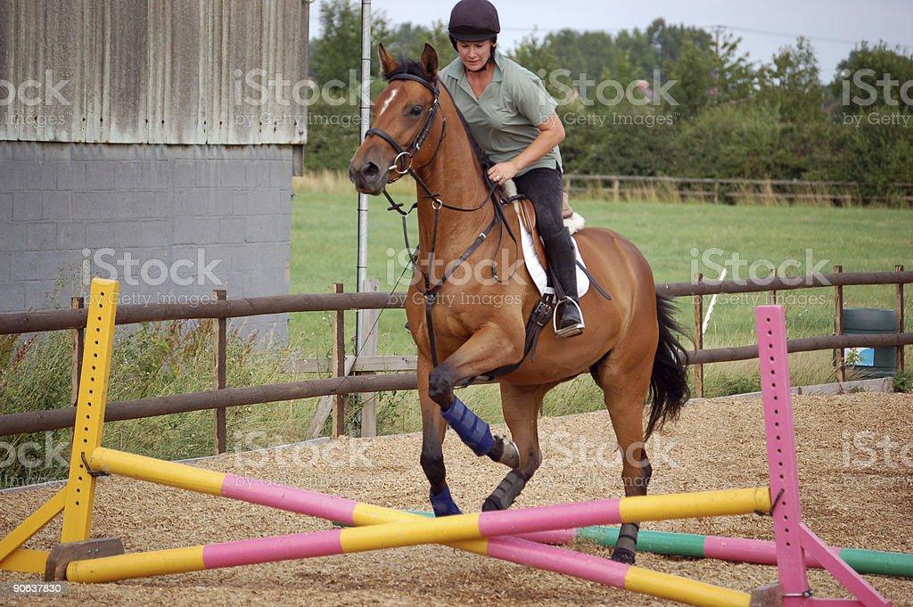 horse training stock photo