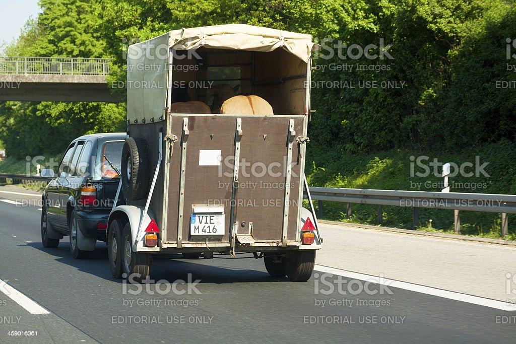 Horse transportation stock photo