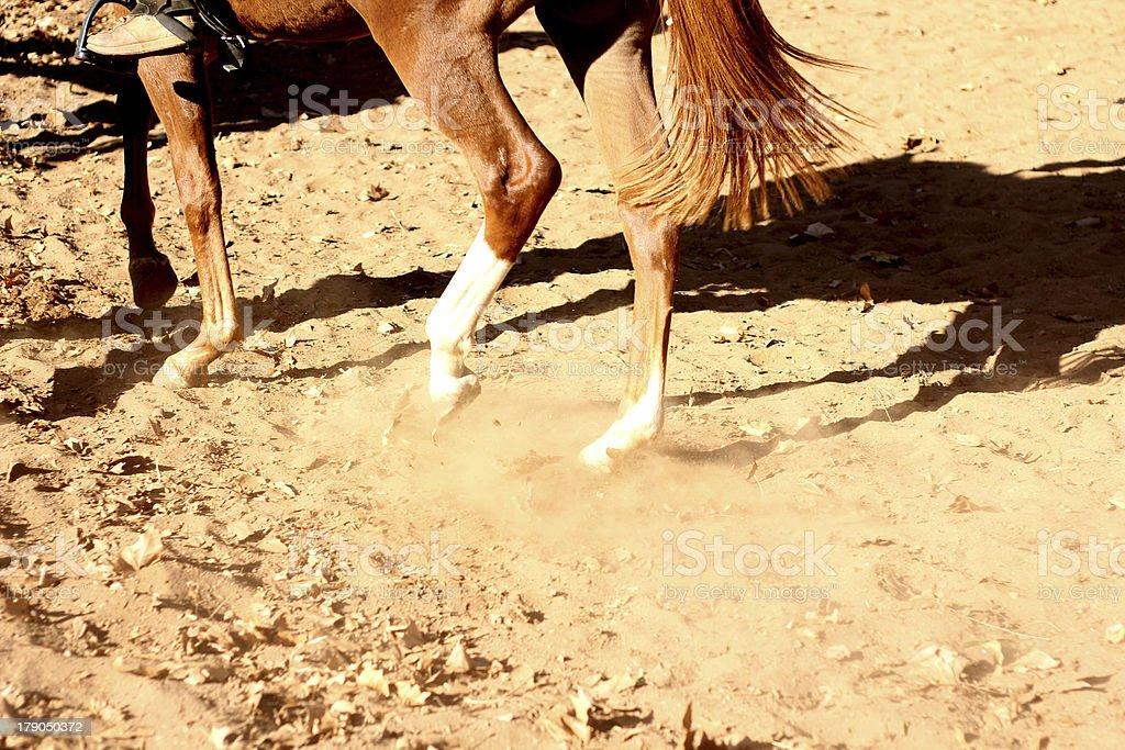 Horse trotting through sand kicking up dirt royalty-free stock photo