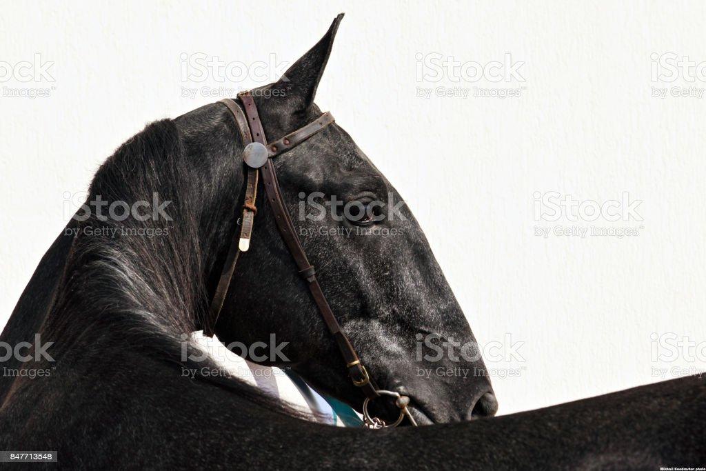 Horse turn head portrait stock photo