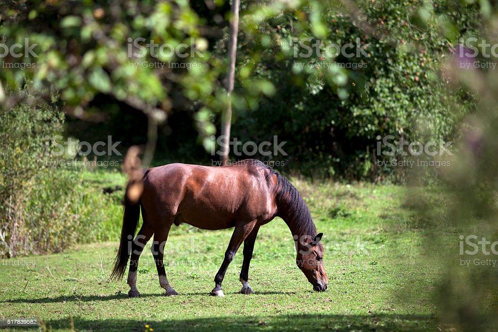horse waiting outside portrait stock photo