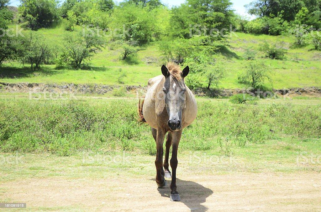 horse walking toward camera royalty-free stock photo