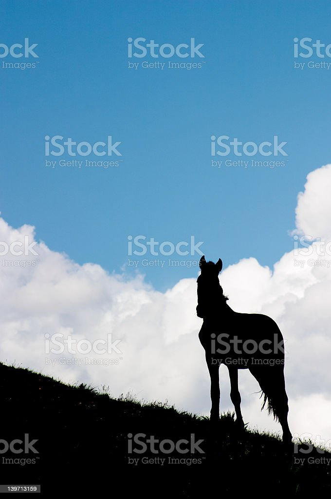 Horse watching royalty-free stock photo