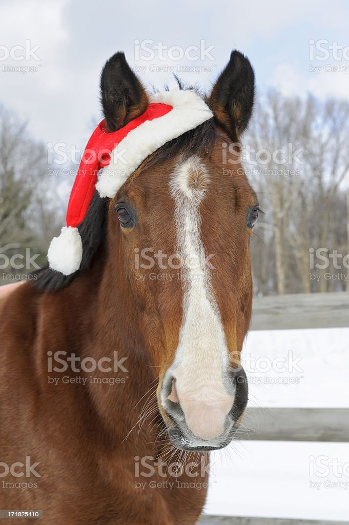 Horse Wearing Santa Hat Outdoors in Snow, Christmas Holiday stock photo