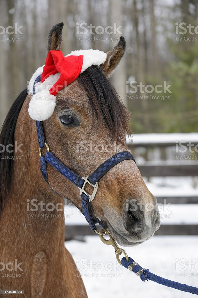 Horse Wearing Santa Hat Outdoors in Snow for Christmas royalty-free stock photo