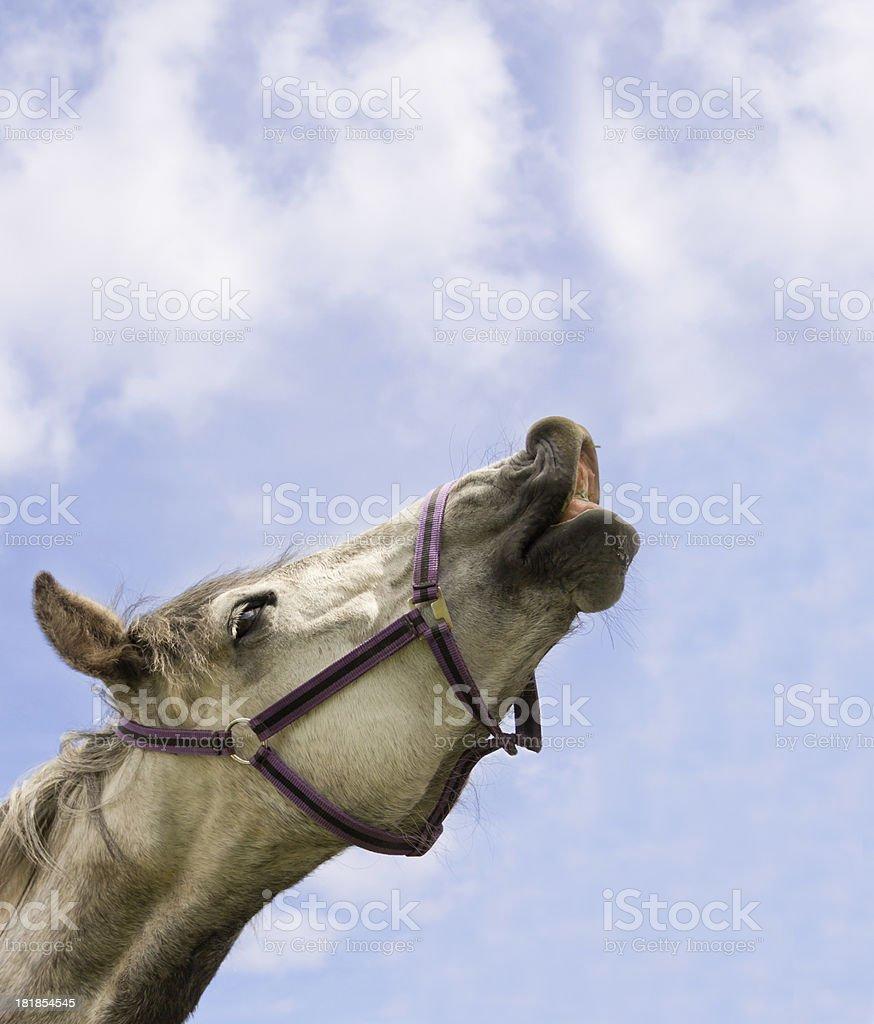 Horse whisperer! stock photo