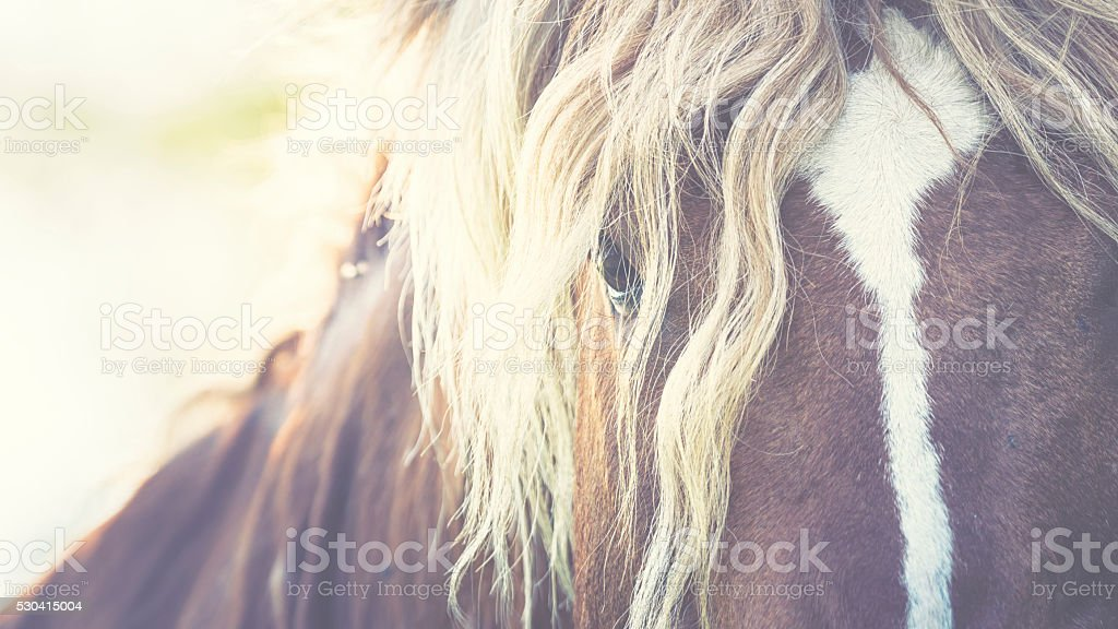 Horse with a fluffy pony stock photo