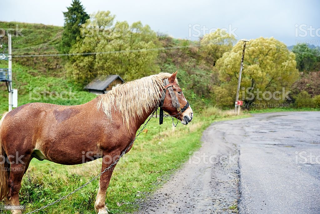 Horse with beautiful mane on the road stock photo