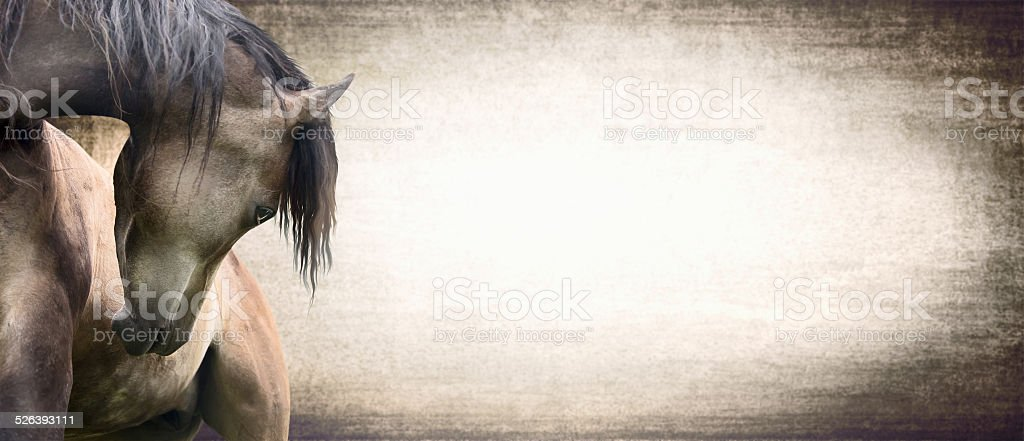horse with beautifully curved neck on texture background, banner stock photo