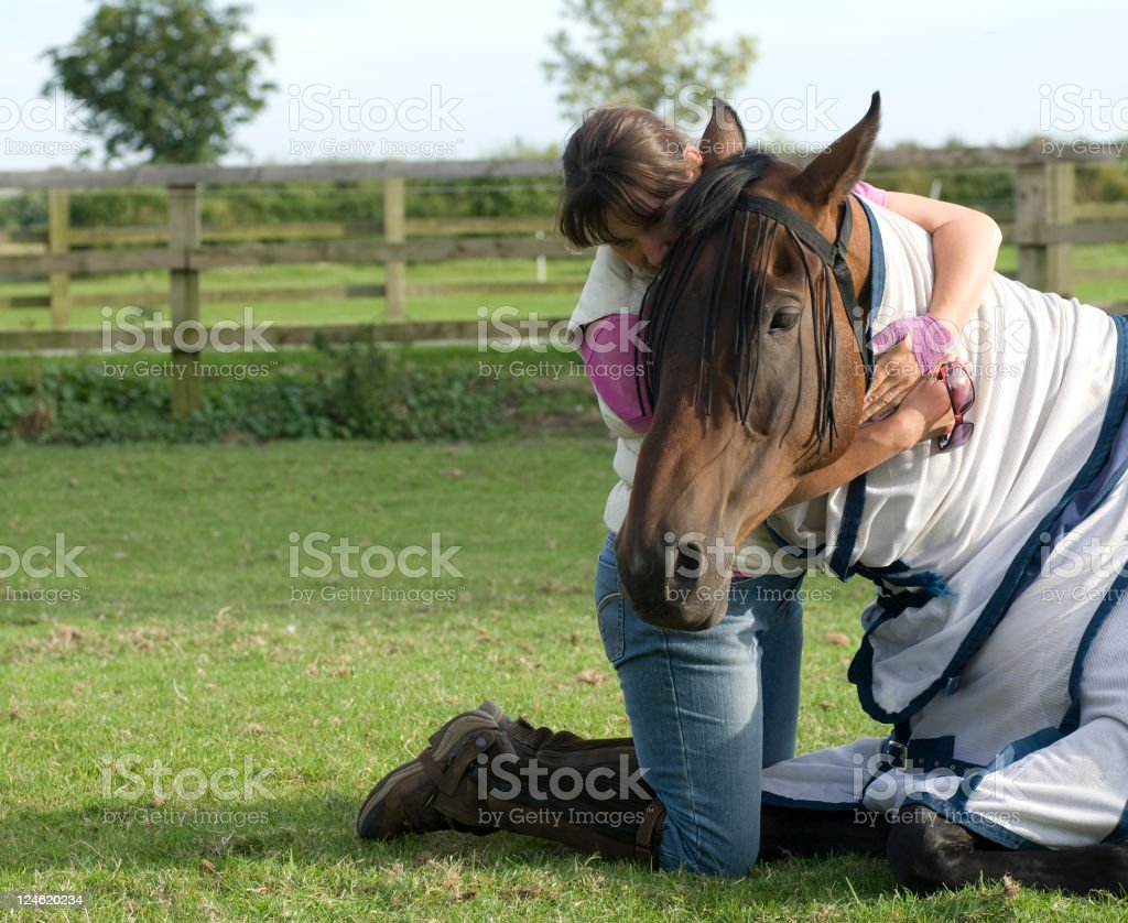 Horse with colic stock photo