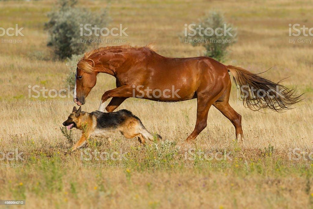 Horse with dog stock photo