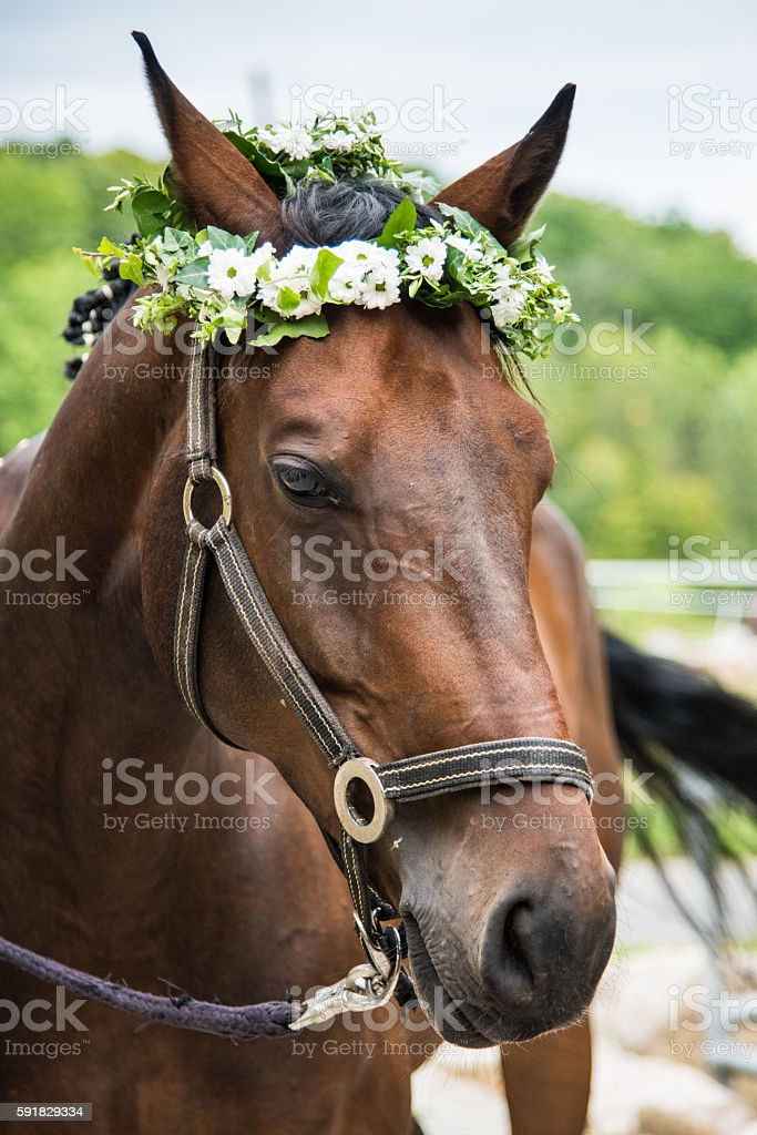 Horse with flower garland wreath stock photo