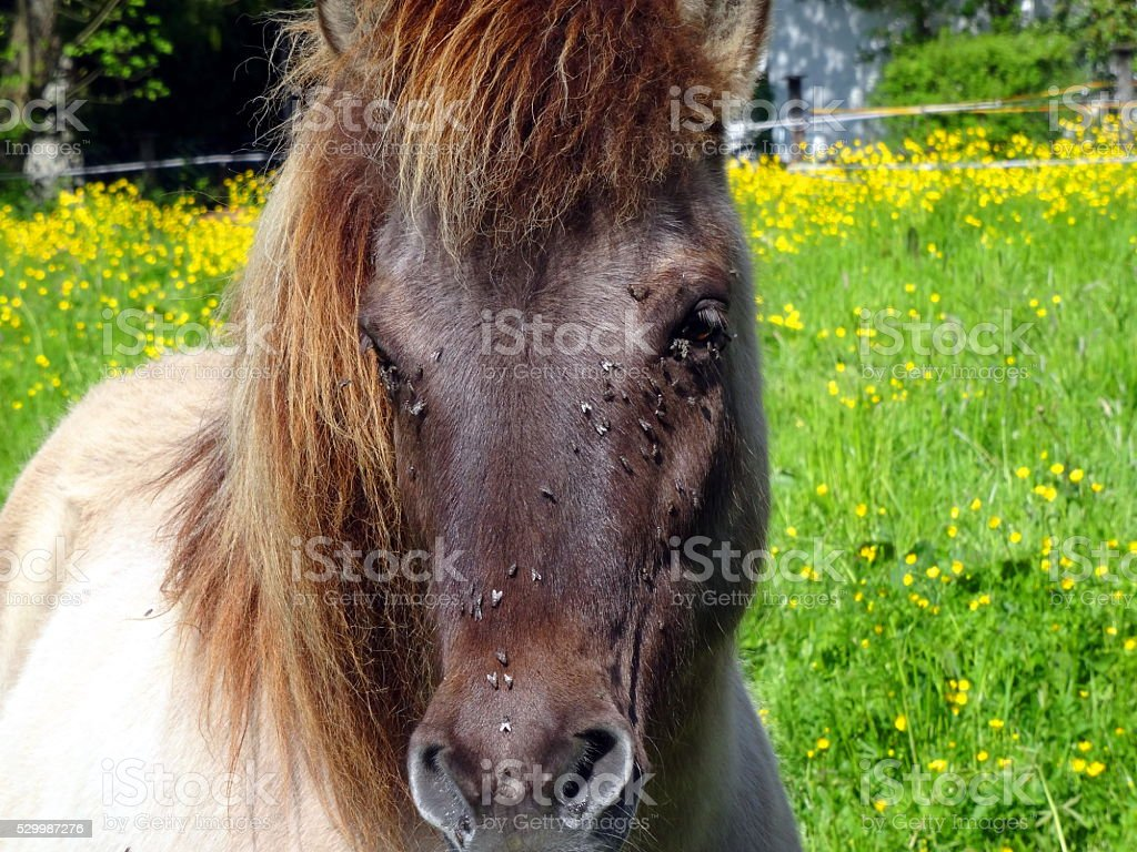 Horse with Fly´s stock photo