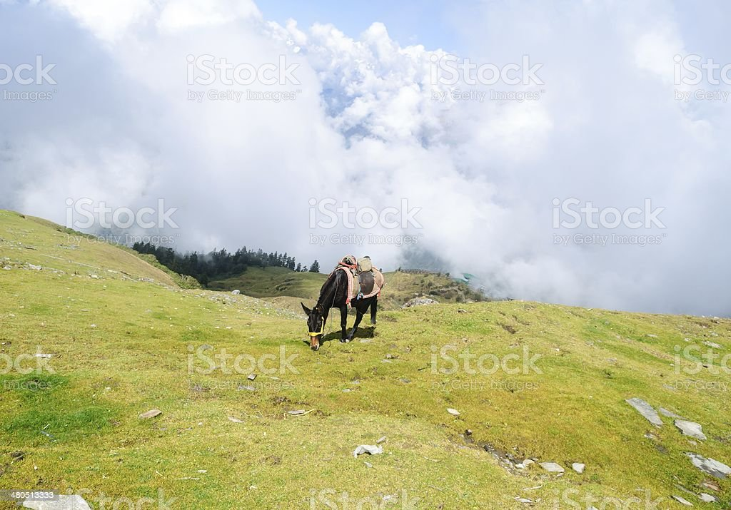 Horse with foggy mountains royalty-free stock photo