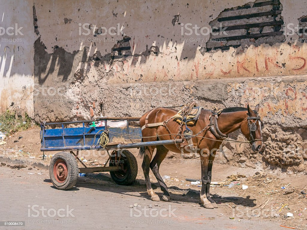 Horse with horse-drawn carriage royalty-free stock photo
