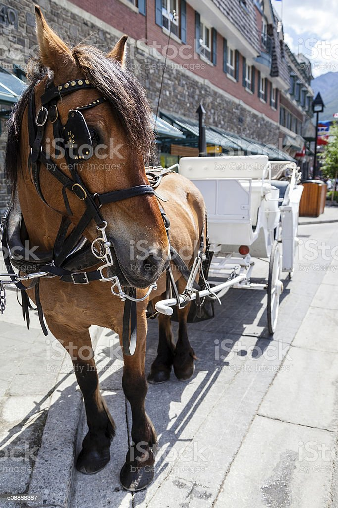 Horse With its Carriage stock photo