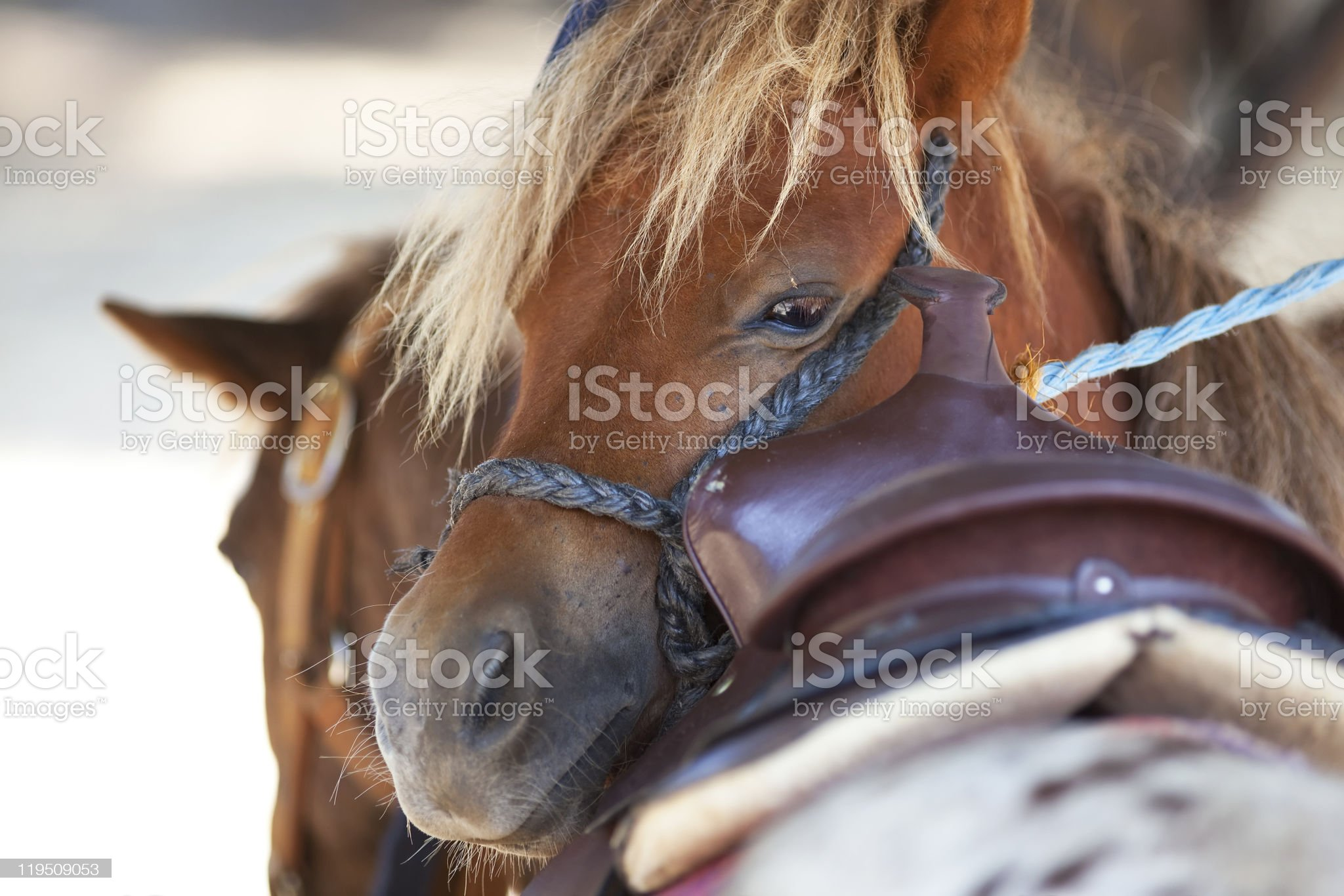 horse with sad eyes royalty-free stock photo