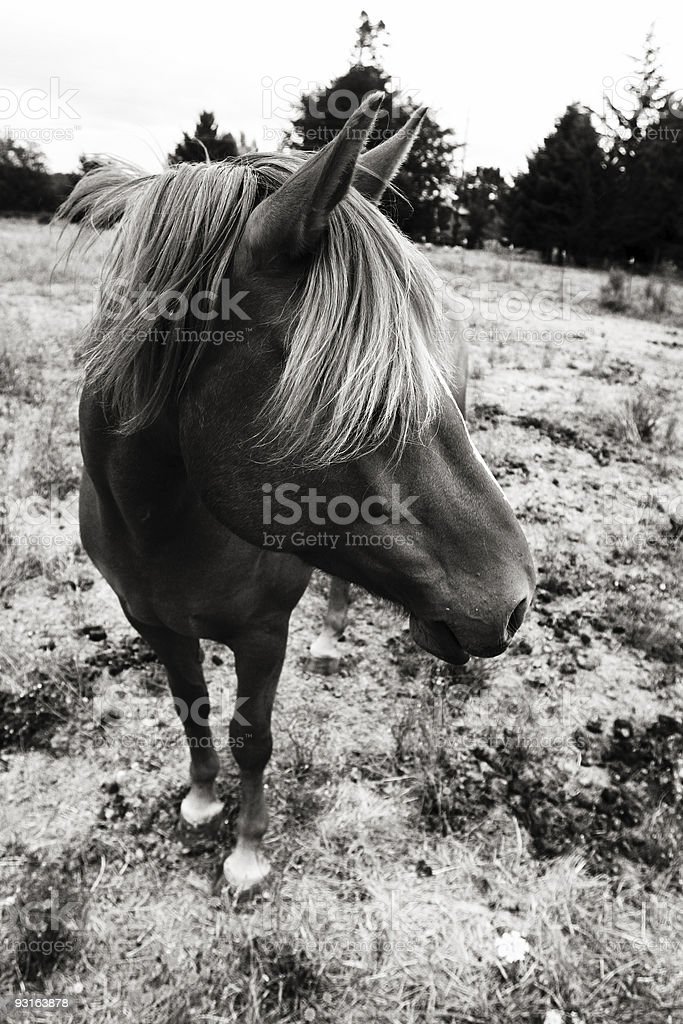 Horse with Shaggy Bangs in a Field stock photo
