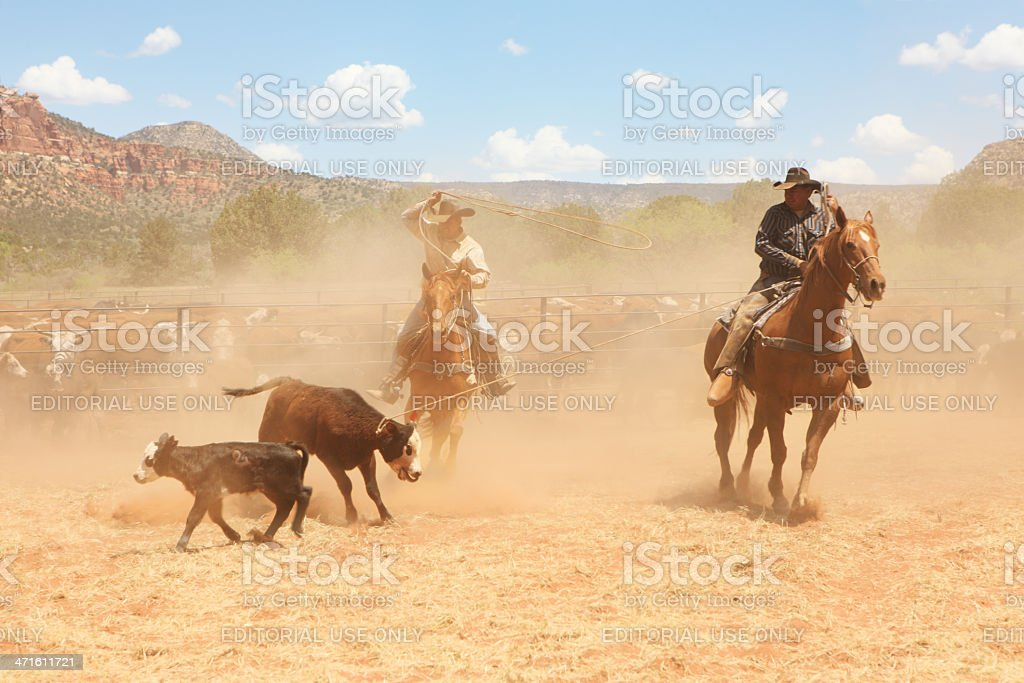 Horseback Cowboy Ranchers Lasso Cattle royalty-free stock photo
