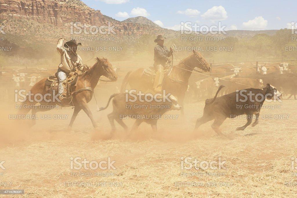 Horseback Cowboys Lasso Cattle Herd stock photo