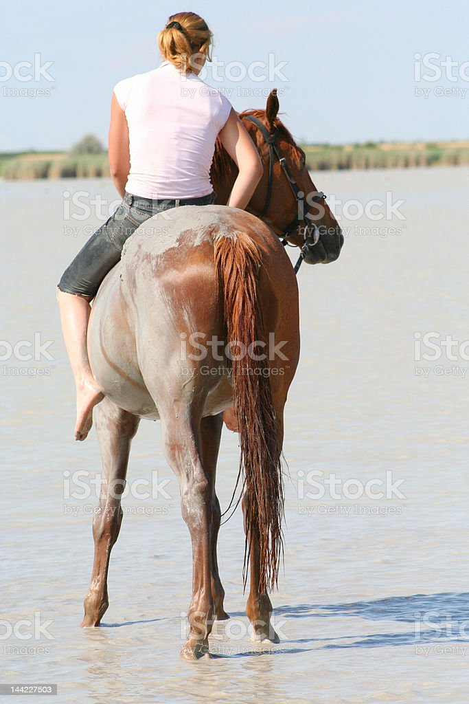 Old Dirty Horse Outdoors On The Pasture Stock Photo, Picture And ...