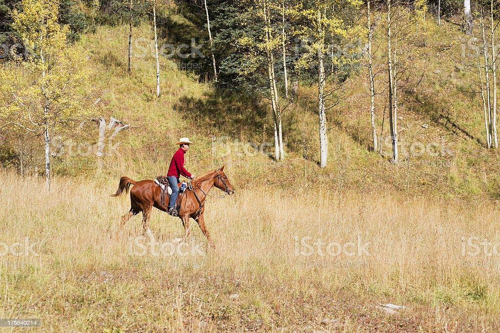horseback riding stock photo