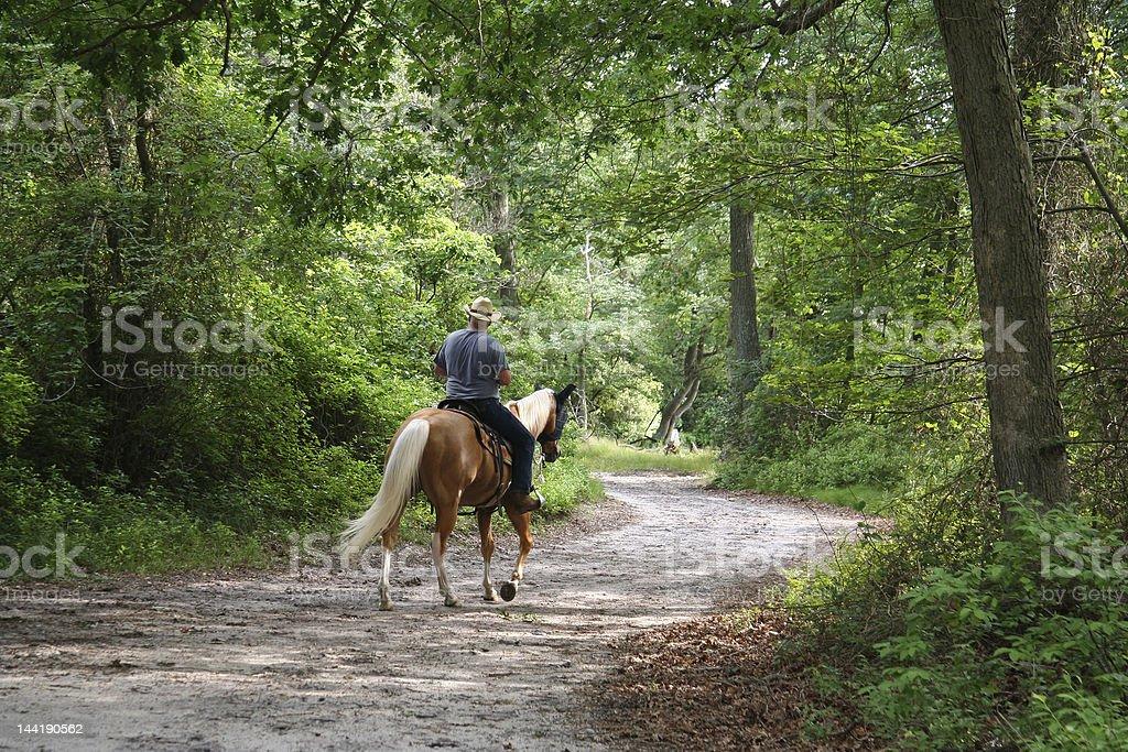 Horseback Riding through the Forest stock photo
