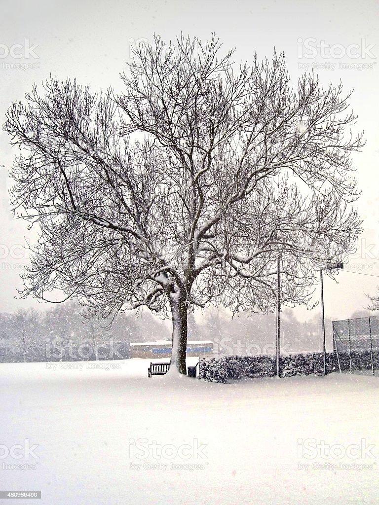 Horse-chestnut Tree in Snow stock photo