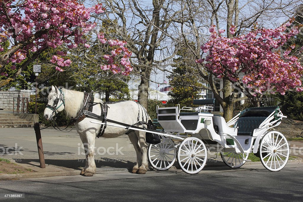 Horsedrawn Carriage stock photo