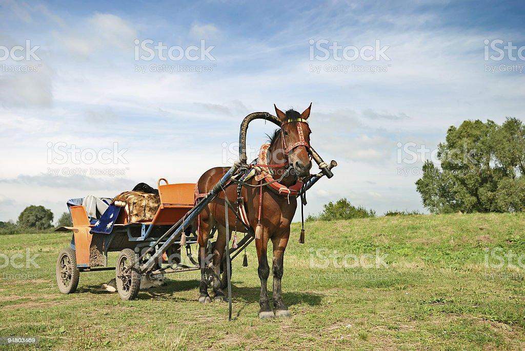 horse-drawn vehicle stock photo