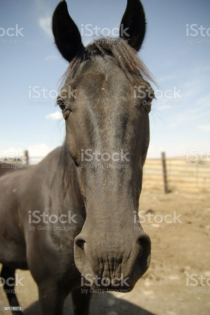 Horseface royalty-free stock photo