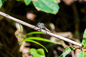Horsefly insect on plant twig