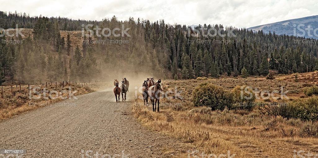 Horsepower stock photo