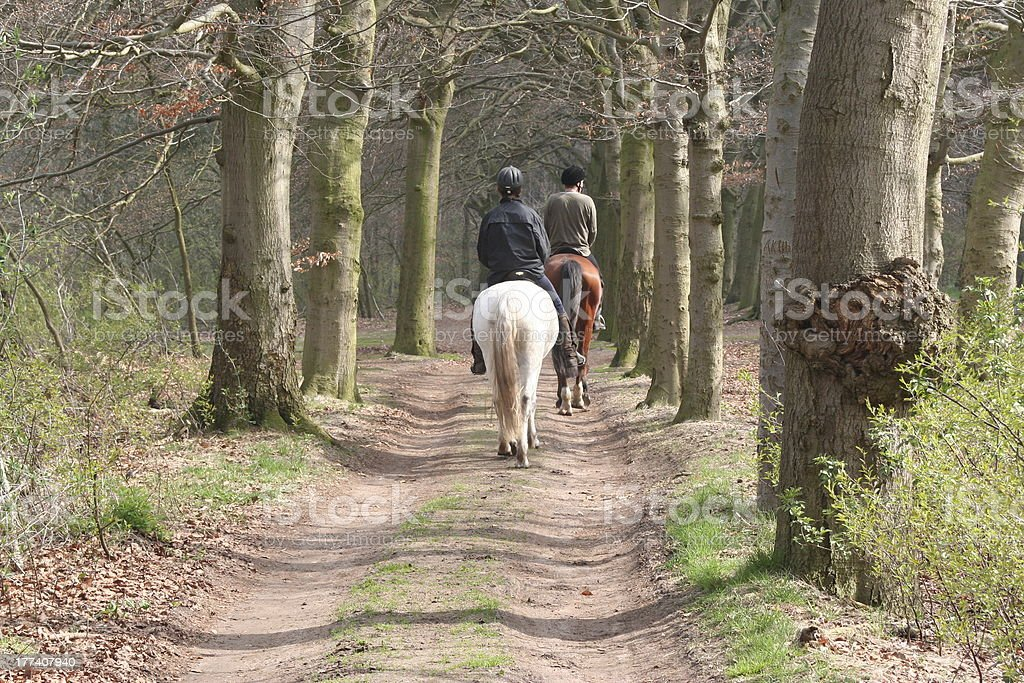 horseriding in the woods stock photo