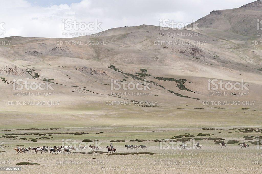 Horseriding on Plateau Mora Ladakh India royalty-free stock photo