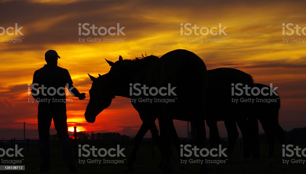 Horses and a unrecognizable men royalty-free stock photo