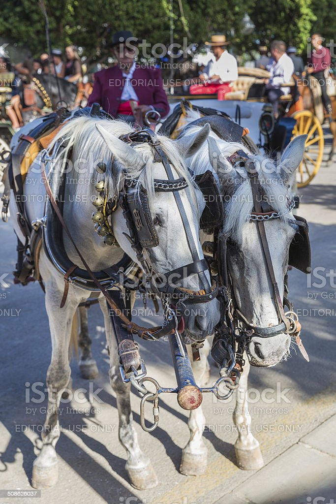Horses and carriages stock photo