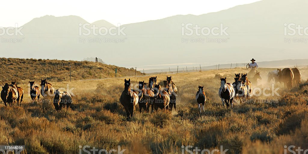 Horses and Cowboy in the Dust stock photo